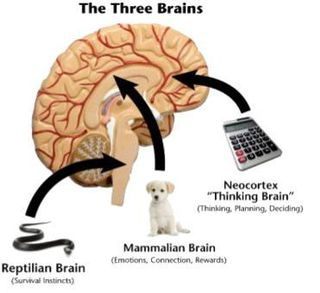 3-brains-revised